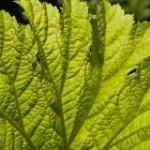 Gesundheit grünes Blatt