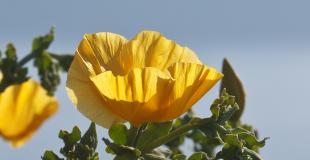 gelbe Blume vor See Homepage
