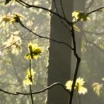 4 Wald Gegenlicht Homepage Reiki